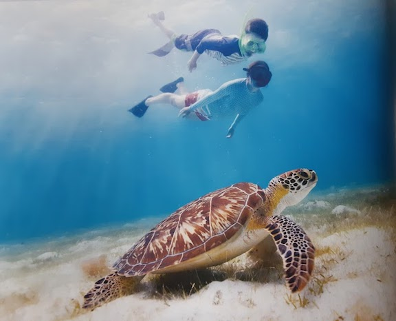 swimming with turtle.jpg