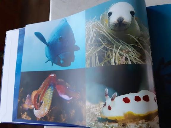 the ocean's diversity.jpg