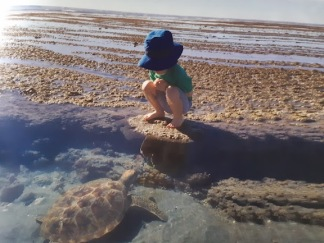 toddler and turtle