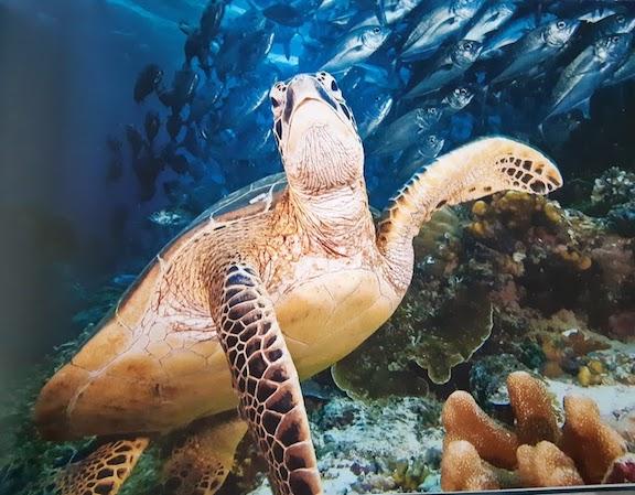turtle waving