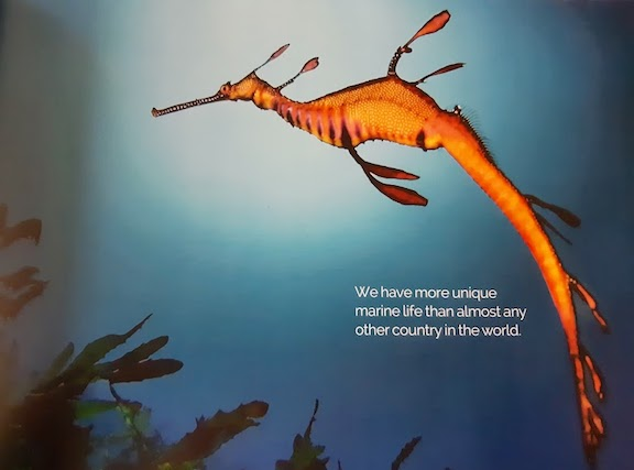 unique marine life