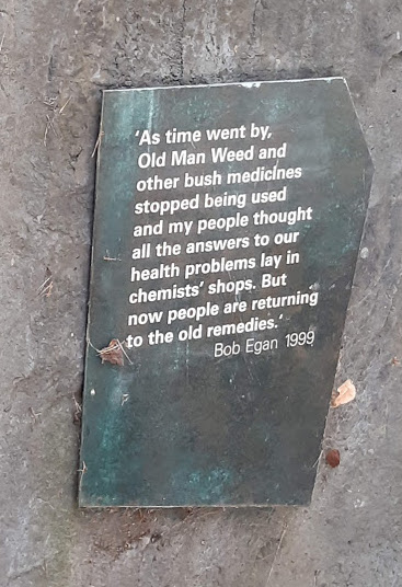 quote about importance of traditional medicines.jpg
