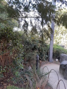 view of path and shrubs