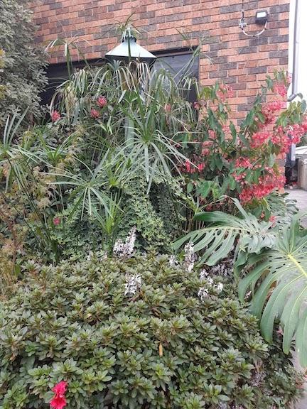 annie's garden.jpg