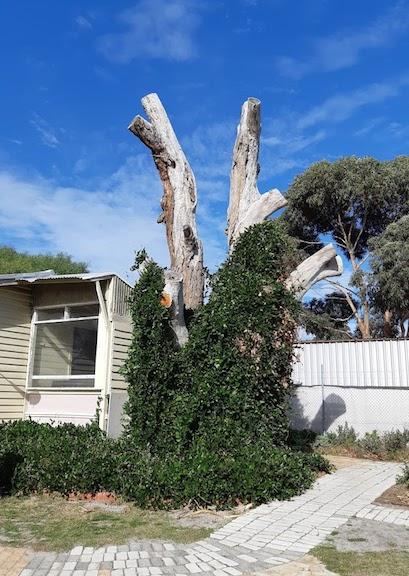 tree with vines