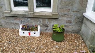 garden pot plants