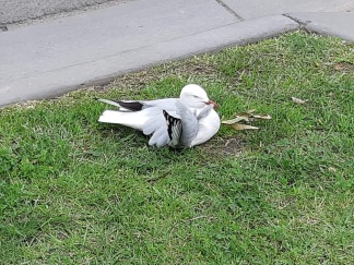 injured bird