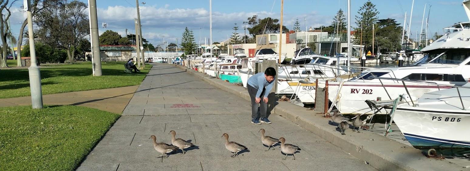ducks crossing mordi creek.jpg