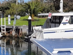 Cormorant on boat