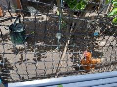 hen coop 4