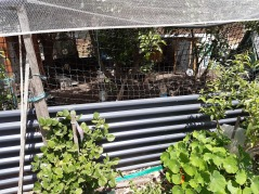 hen coop