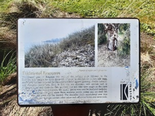 indigenous plants