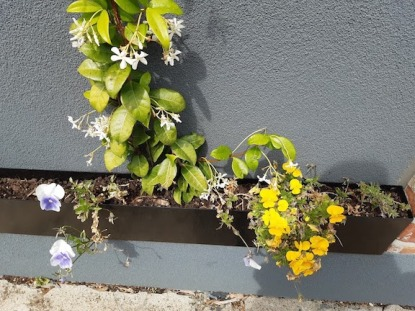 flowers in window box mentone