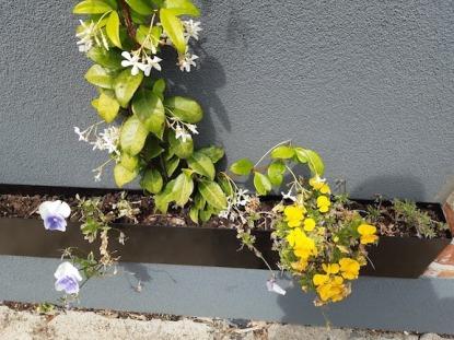 flowers in window box mentone