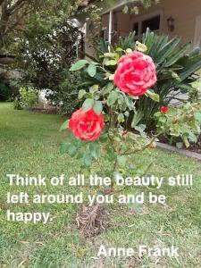 2 overnight roses