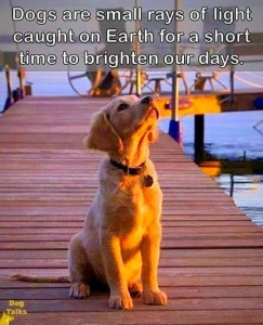 FB_dogs brighten our day