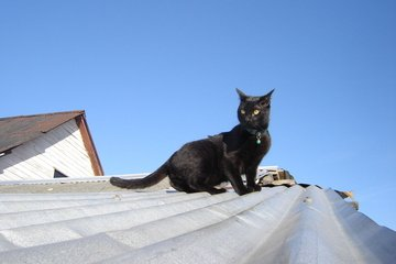 black-cat-roof.jpg