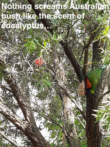 lorikeet in bottlebrush.jpg