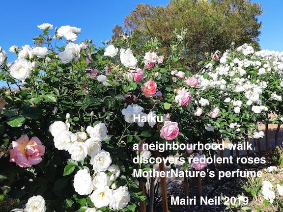 roses canberra