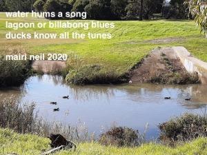ducks happy