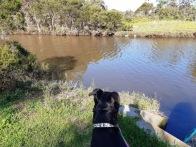Josie watching for ducks