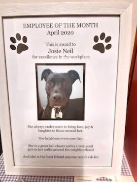 Josie's certificate