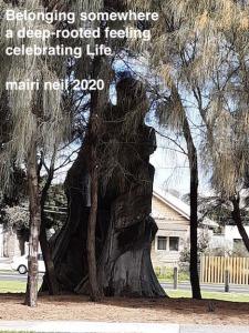 tree at creek - woman watching