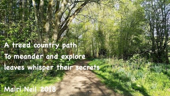 woodland walk Aberdeen