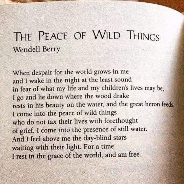 FB_Poem for peace