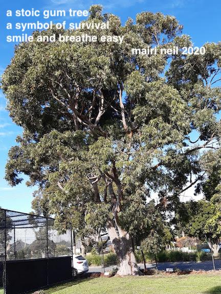 tree at park